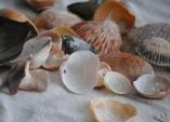 Mušle a kamínky zdovolené: Co znich vytvořit?