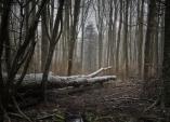 Hrůzostrašné události na pohřebním místě bývalé osady Smolná