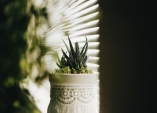 Provence styl vašim nudným bílým květináčům dodá nevyužitá krajka